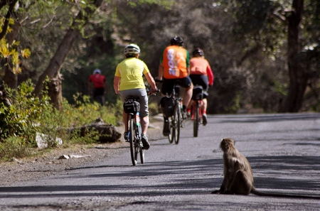 monkeys in the road