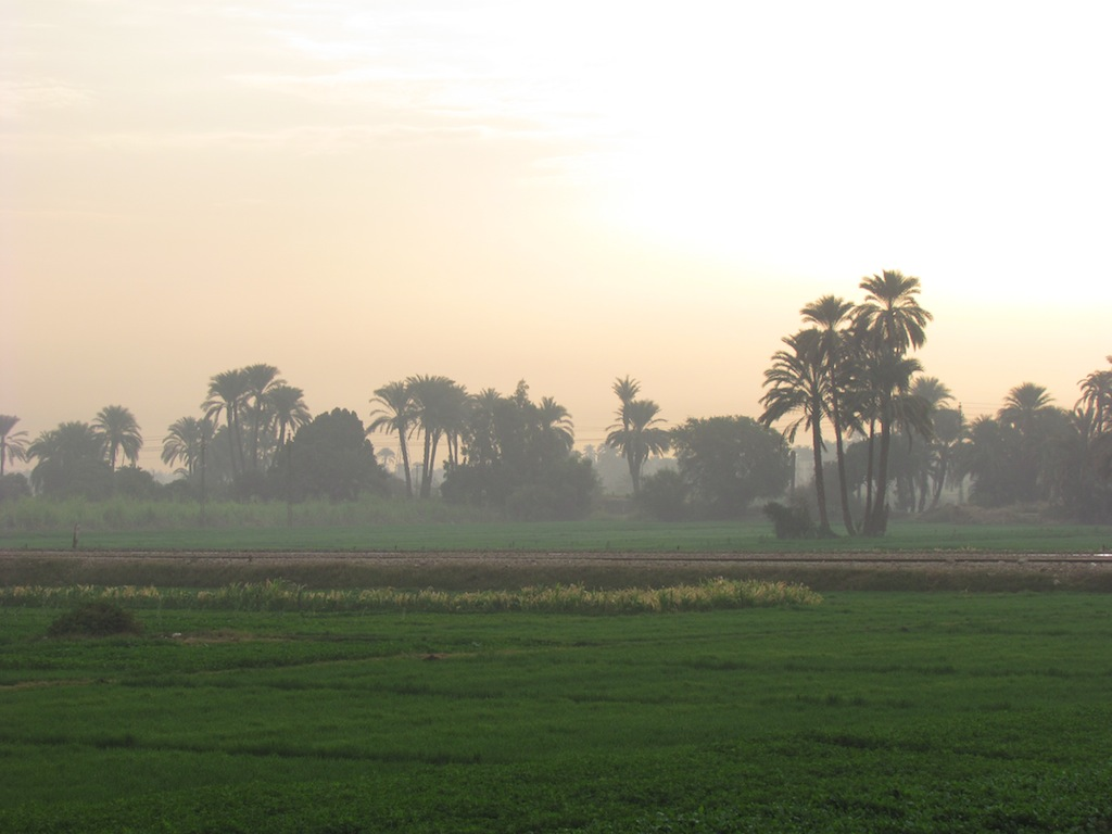 Green fields of the Nile