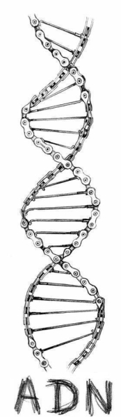 cyclist DNA