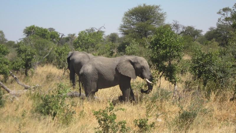 Botswana & the Elephant Highway