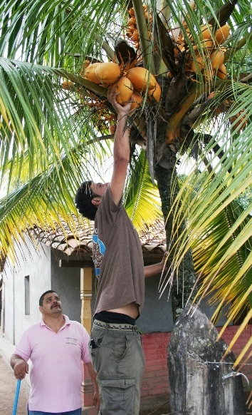 cristiano foraging for food in Honduras