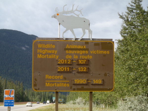 Wildlife mortality