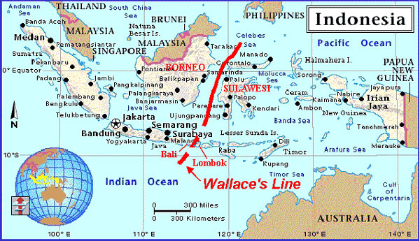 Wallace line | tdaglobalcycling.com