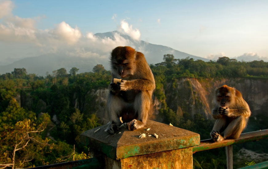 Monkey Business on the Trans-Oceania Bicycle Expedition