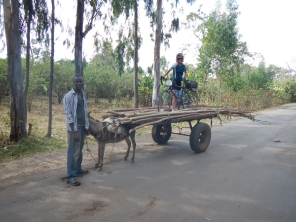 donkey bike