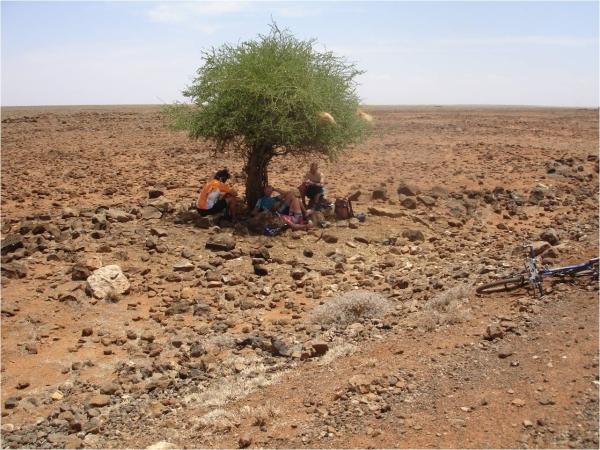 DIDA GALGALU TREE