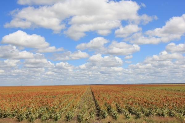 Botswana field