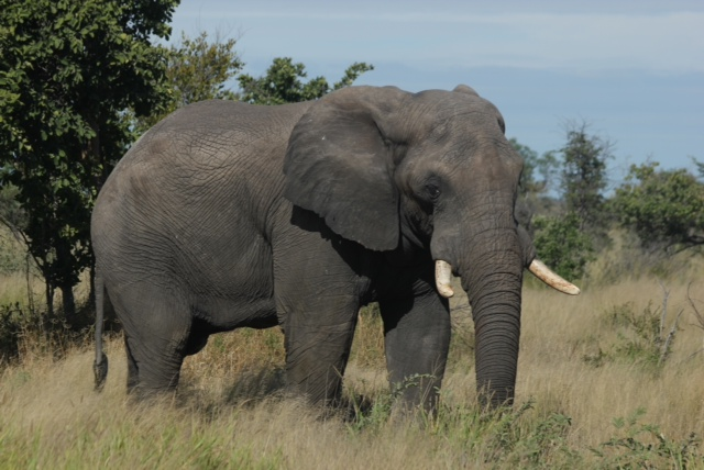 Elephant Poo, Dung Beetles & Blue Skies: A look back at the Elephant Highway.