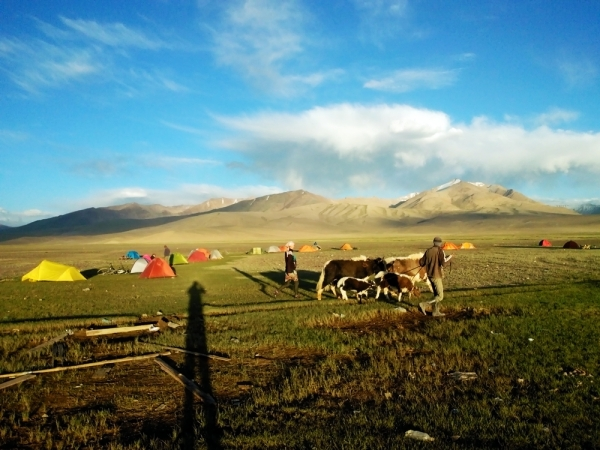 Yaks and tents