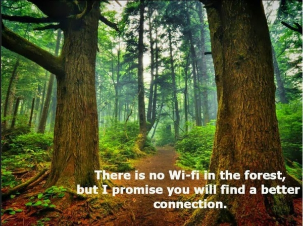 forest-bathing-health-benefits-no-wi-fi-better-connection
