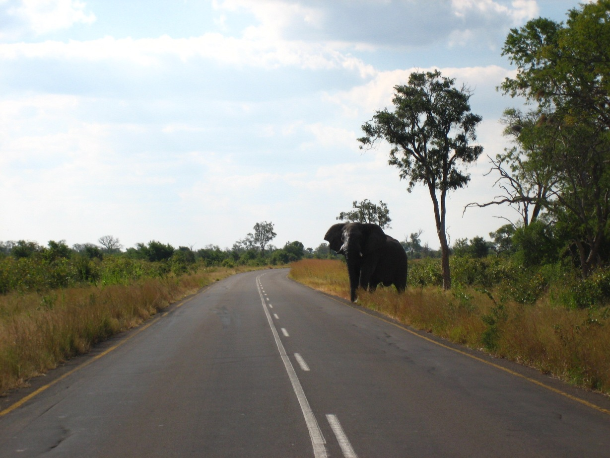 The Elephant Highway