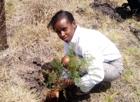 High School Student Planting  a Tree