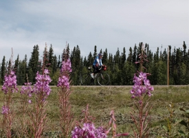Blog - Diane crusing along the Alaska Highway.