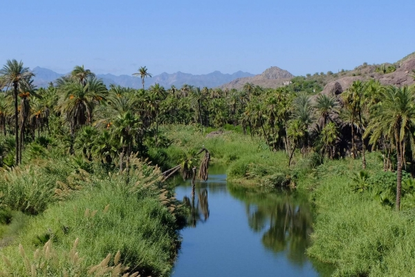 All of a sudden, Baja turns tropical!
