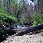 Koala Bears and Rail Trails