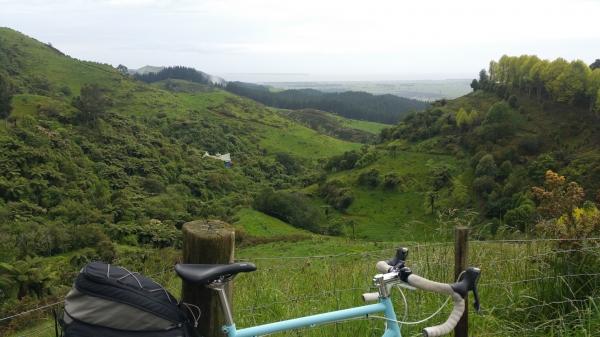 Blog 12 - 03 - Lush Vegetation