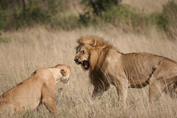 sony to safari-140