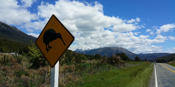 Image04-Kiwi Bird Alert