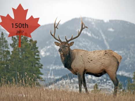 Celebrating 150 Years of Canada: Art, Music, Nature, Food & Cycling