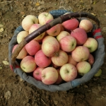 An Apple a Day Keeps the Doctor Away: Medic's 7 Tips for Staying Healthy on a Bicycle Expedition